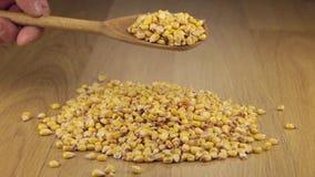Los granos del maíz consiguen bastante sueño de una cuchara de madera en una pila de maíz almacen de video