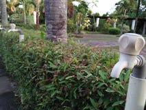 Los grifos de agua se alinearon en el parque fotografía de archivo