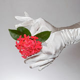 Los guantes blancos de la mujer elegante que sostienen las flores en forma de corazón en el fondo blanco Imágenes de archivo libres de regalías