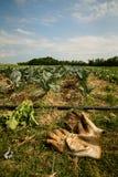 Los guantes del granjero Fotografía de archivo