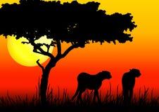 Los guepardos siluetean en puesta del sol ilustración del vector