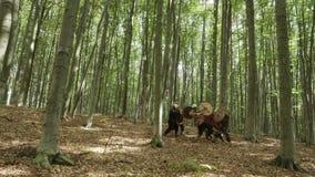 Los guerreros de Vikingos están luchando En el bosque almacen de metraje de vídeo