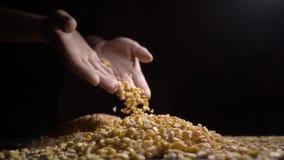 Los guisantes secados se vierten en una tabla, fondo negro almacen de video