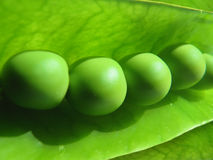 Los guisantes verdes se cierran para arriba Imagen de archivo