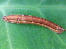 Los gusanos salvajes de la naturaleza fotografía de archivo