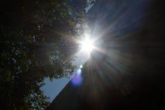 Los haces de Sun vierten a través de árboles en bosque del otoño fotografía de archivo libre de regalías