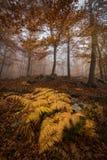 Los helechos se movieron por el viento en el bosque de Montseny Fotografía de archivo libre de regalías