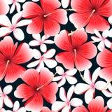 Los hibiscos tropicales rojos florecen con el modelo inconsútil del frangipani Imagenes de archivo