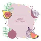 Los higos de la fruta mandan un SMS a la plantilla plana exhausta de la mano del marco Diseño del vector con el ejemplo botánico  ilustración del vector