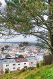 Los hogares de San Francisco enmarcaron por los árboles Fotos de archivo libres de regalías