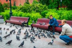 Los hombres alimentan pájaros en el jardín de Alexandrovsky de la Moscú el Kremlin fotografía de archivo