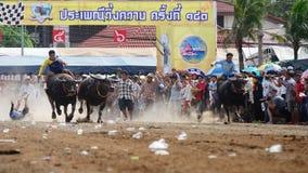 Los hombres no identificados controlan su búfalo para correr en un deporte que compite con Imagen de archivo libre de regalías