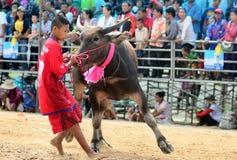 Los hombres no identificados controlan su búfalo para correr en un deporte que compite con Fotografía de archivo