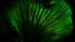 Los hongos se encienden para arriba en la oscuridad Crece llega a ser luminoso foto de archivo libre de regalías