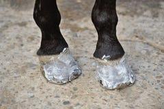 Los hoofs del caballo con el ungüento Imagenes de archivo