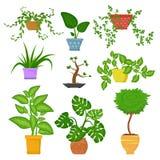 Los houseplants decorativos en potes fijaron aislado en el backgrund blanco Plantas interiores decorativas Planta verde para el h Imágenes de archivo libres de regalías