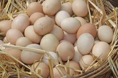 Los huevos acaban de poner en una cama de la paja mullida Fotos de archivo