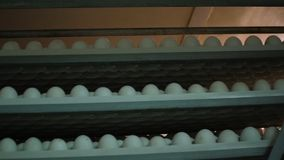 Los huevos atormentan, los estantes de los huevos en una incubadora metrajes