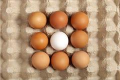Los huevos broncean, blanco en el empaquetado gris foto de archivo libre de regalías