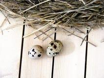 Los huevos de codornices en el ` s de las codornices jerarquizan Imagenes de archivo