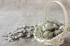 Los huevos de codornices en la cesta con el sauce ramifican, se cierran para arriba foto de archivo