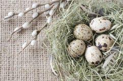 Los huevos de codornices en la jerarquía con el sauce ramifican, se cierran para arriba fotos de archivo libres de regalías