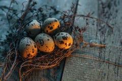 Los huevos de codornices en un tomillo jerarquizan en la tabla de madera rústica Uso para el ejemplo de pascua Imagen de archivo libre de regalías
