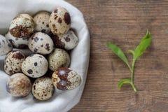 Los huevos de codornices en una tabla de madera vieja con la primavera verde se van Fotografía de archivo
