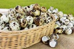 Los huevos de codornices mucha adentro cesta y montón descascan los huevos de codornices en sackc Imagen de archivo libre de regalías