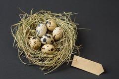 Los huevos de codornices de Pascua en la jerarquía y el papel hecho a mano en blanco cubren Tarjeta gretting en blanco por los dí Imagen de archivo libre de regalías