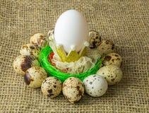 Los huevos de codornices y el huevo del pollo es uno con la corona están en un círculo alrededor del cuenco azul plástico de sal  Imagen de archivo