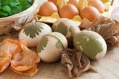 Los huevos de Pascua adornados con las hojas frescas, listas para ser teñido con la cebolla pelan Fotografía de archivo libre de regalías