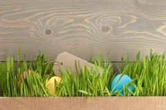Los huevos de Pascua hiden en hierba Fotos de archivo libres de regalías