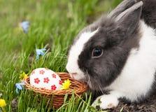 Los huevos del conejito de pascua encontraron en una pequeña cesta Imágenes de archivo libres de regalías