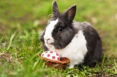 Los huevos del conejito de pascua encontraron en una pequeña cesta Fotos de archivo libres de regalías