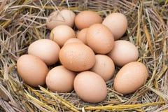 Los huevos en una cesta se colocan en la paja Fotos de archivo