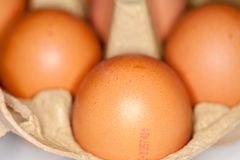 los huevos mienten en un cartón del huevo Foto de archivo