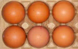 los huevos mienten en un cartón del huevo Foto de archivo libre de regalías