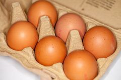 los huevos mienten en un cartón del huevo Fotografía de archivo