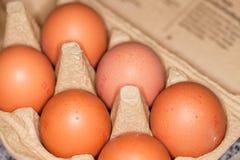 los huevos mienten en un cartón del huevo Fotos de archivo
