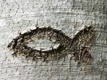 Los ichthys cristianos del símbolo pescan, rasguñado en una corteza de árbol Fotografía de archivo libre de regalías