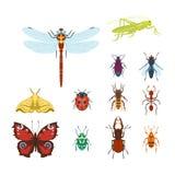 Los iconos coloridos de los insectos aislaron el ejemplo salvaje del vector de los insectos del verano del detalle del ala de la  ilustración del vector