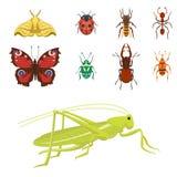 Los iconos coloridos de los insectos aislaron el ejemplo salvaje del vector de los insectos del verano del detalle del ala de la  libre illustration