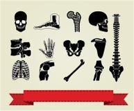 Los iconos de la anatomía fijaron 2 Fotografía de archivo libre de regalías