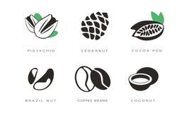 Los iconos de las nueces y de las semillas fijaron, pistacho, nuez de cedro, vaina del cacao, el Brasil, granos de café, ejemplo  ilustración del vector