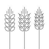 Los iconos del vector del punto del trigo fijados aislaron la espiga del estilo del esquema Imagen de archivo libre de regalías