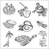 Los ingredientes para los cosméticos Foto de archivo libre de regalías