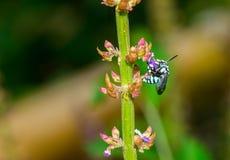 Los insectos chupan la flor Foto de archivo