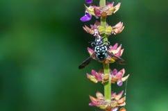 Los insectos chupan la flor Foto de archivo libre de regalías