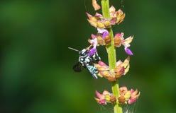 Los insectos chupan la flor Imágenes de archivo libres de regalías